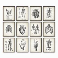 Anatomie humaine Antique Art Print Set de 12 - décoration Vintage anatomie - Antique livre plaque - étudiant en médecine cadeau idée photo ensemble de 12 Imprimé en utilisant des encres darchives de haute qualité sur papier darchivage poids lourd avec une finition mate et lisse. Un cadeau fantastique ou un fabuleux ajout à votre maison ! Sil vous plaît choisir entre différentes tailles. --------------------------------------------------------------------------------------------- Accueil d...