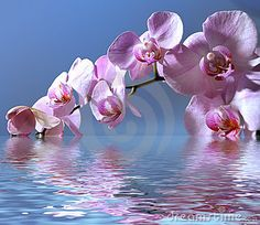 Orchids Stock Photos, Images, & Pictures – (18,685 Images) - Page 3