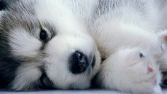 Why are baby animals the cutest and best things in the world ever?