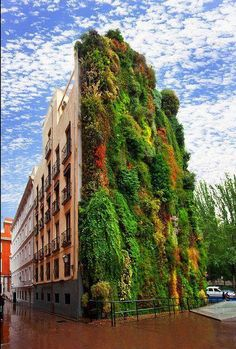 Vertical garden of Caixaforum Madrid (Spain)