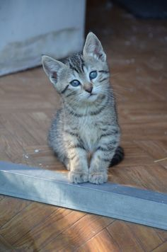 The most cute kittens on Yummypets.com.... Discover them #cute #kitten #animal #pet #chat #kitty #meow #cat