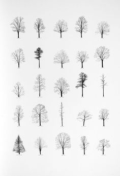 Katie Holten, Trees of the USA (2006)