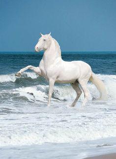 White horse, white sea foam.