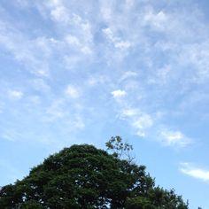 Home Sweet Home: View, Tree, Sky, 庭, 景色, 空