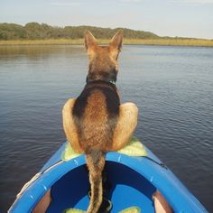 Annie loves to kayak with her owner.