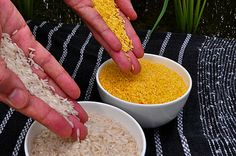 Golden_Rice Scientific American comes out in favor of GMOs In the September 6 issue of Scientific American, the magazine's editors pen a piece explicitly supporting GMOs and opposing GMO labeling. Golden Rice, Gmo Facts, Genetically Modified Food, World Hunger, Beta Carotene, Food Safety, Biotechnology, Vitamins, Healthy Eating