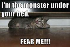 Fear the cute! http://chzb.gr/1YHJvqH