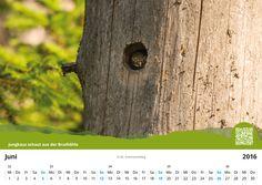 "Fotokalender 2016 ""Nationalpark Schwarzwald"" erhältlich unter http://schwarzwald-basar.de/epages/es572570.sf/de_DE/?ObjectPath=/Shops/es572570/Products/010"