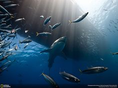 National Geographic's Photo Contest 2014