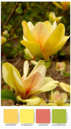 Good Morning Magnolia – Stampin' Up! Colour Pallete, Colour Schemes, Color Combos, Color Palettes, Flor Magnolia, Magnolia Colors, Color Blending, Color Mixing, Caran D'ache