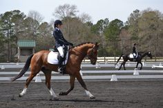 """Fernhill Me and You 2, """"Liem"""" is a 6 year old, 16.1 hd Irish sport horse gelding"""