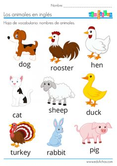 ▷ ANIMALES EN INGLÉS | Vocabulario + Ejercicios + Flashcards English Activities For Kids, Learning English For Kids, English Lessons For Kids, Preschool Learning Activities, Learn English Words, Teaching English, English Vocabulary Exercises, Animals Name In English, Arabic Alphabet For Kids