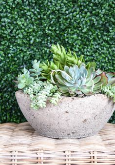The Top Tip so you can stop killing your succulents This one's for my black-thumbed brethren