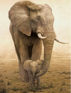 Amazing wildlife - Elephant with baby photo #elephants