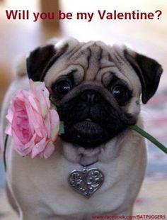 Romantic Pug #authorninamoon