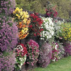 Fence planters are one of the best ways to brighten up a backyard and bring the colors of flowers and shrubs up from the ground and at eye level. Planter Box Plans, Planter Boxes, Planter Ideas, Container Plants, Container Gardening, Flower Gardening, Organic Gardening, Flower Containers, Dream Garden