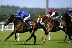 HORSE RACING COMPETITON