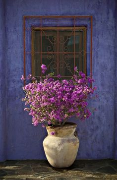 The colours! Bougainvillea with Blue Wall Todos Santos, Baja Sur, Mexico Bougainvillea, Beautiful Gardens, Beautiful Flowers, Simply Beautiful, Beautiful Wall, Deco Floral, Window Boxes, Blue Walls, Windows And Doors