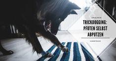 LokisLife | Hundeblog LokisLife | Hundeblog - Ein deutschsprachiger Blog über das Leben mit einem Hund aus dem Auslandstierschutz. Leser finden hier unter anderem DIYs, Literaturtipps, Produkttests, Empfehlungen und Tipps zur Hundeerziehung. Ihr möchtet eurem Hund beibringen, sich seine Pfoten selbst abzuputzen? Mit dieser Trickanleitung gelingt euch der Hundetrick ganz leicht. Der Beitrag Hundetricks: So lernt euer Hund, sich seine Pfoten selbst abzuputzen erschien zuerst auf LokisLife… Movie Posters, Blog, Dog Training Tips, Studying, Animals, Film Poster, Film Posters