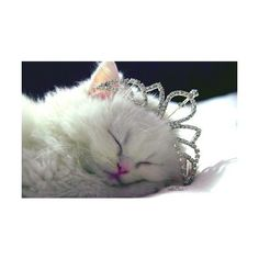 dreams that glitter xo ❤ liked on Polyvore featuring animals, cats, pictures, backgrounds and photos
