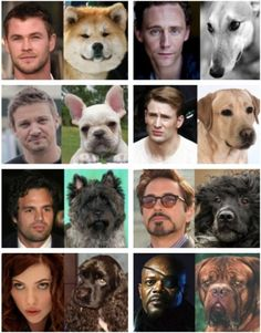 The Dogs Avengers!