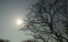 Shades of Sun
