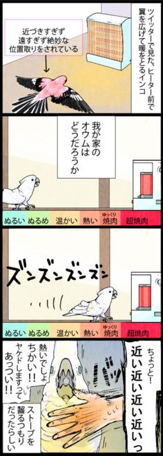 漫画「いたずらオウムの生活雑記」 (441) ヒーターを前にしたオウム   ライフスタイル   マイナビニュース