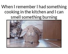 15+ Hilarious Funny Pictures of The Day | Funny Pictures, Quotes, Pics, Photos, Images