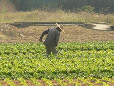 El personaje: Lencho es un granjero que perdió sus cosechas y escribió una carta a Dios. Él es descortés, exigente, y desagradable.