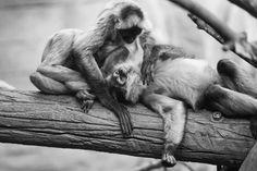 Calgary Zoo by Patrick Latter