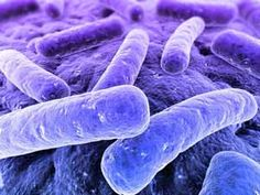 Bacteria on marine sponges can develop capacity to move and inhibit biofilm formation
