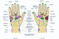 hand-reflexology-both2.jpg (1426×937)