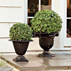 Go bold with elegant ivy orbs by the door. Depending on the size of your space, use them alone, as a pair, or even as a trio. Elevate simple globes by Outdoor Landscaping, Outdoor Gardens, Container Plants, Container Gardening, Dream Garden, Home And Garden, Indoor Trees, Topiary Trees, Topiary Garden