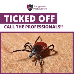 For More Information, you can visit our website. Pest Control, Brisbane, Website, Bed Bugs Treatment