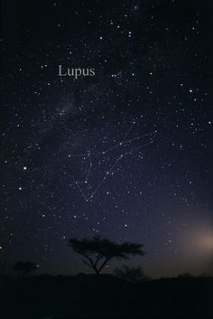 Constellation Lupus - Lupus (constellation) - Wikipedia, the free encyclopedia