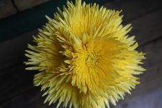 Yellow Spider Mums would be a good wedding flower