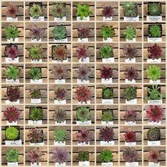 Hardy little plants!