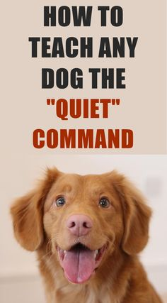 Does your dog bark excessively? You can train your dog to be quiet and to stop barking on command by following this easy 3 step method. Group Of Dogs, Dog Care Tips, Puppy Care, Dog Hacks, Pet Treats, Dog Behavior, Dog Training Tips, Service Dogs, All Dogs