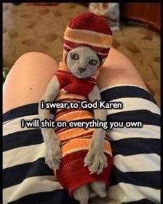 Funny Memes hilarious so true laughing,funny memes can't stop laughing,funny memes comebacks,funny memes sarcastic humor hilarious,funny memes hilario. Memes Humor, Funny Animal Memes, Cute Funny Animals, Funny Animal Pictures, Funny Dogs, Funny Memes, Funniest Memes, Funny Fails, Fail Pictures