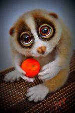 OOAK Needle Felted Lemur Lorrie by Artist Feyaya. All Occasion. 20 cm.