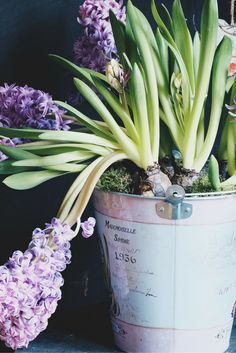 Hyacinth smells so lovely ~ Renovator's Supply