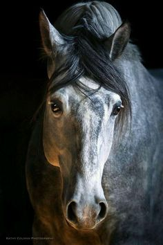 Basic Rules About Horseback Riding For Beginners - Pferde - Most Beautiful Horses, All The Pretty Horses, Animals Beautiful, Cute Horses, Horse Love, Dapple Grey Horses, Horse Portrait, Majestic Horse, Horse Photos