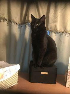.pretty black kitty.