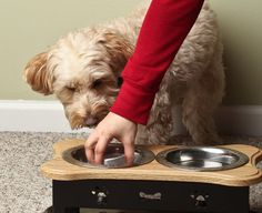 New Yorkers love their pets even so that fine dining privileges are being extended to them. Find out how pets are getting gourmet, chef-driven food.   Schnitzel the dog waits to taste-test his gourmet dinner.