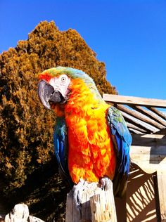 Parrot in North Valley, NM