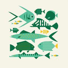 Virgin islands fish j fletcher