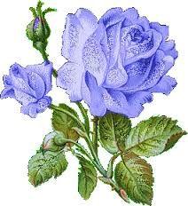 Rosas Azuis significa verdadeiro amor eterno, forte e raro, mistério, conquista daquilo que é impossível
