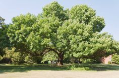 The ETC team is very excited to treat this beautiful ash tree again this year! Providing shade for the whole yard it would be devastating to lose it. Don't hesitate to call us for ash tree and other plant health care concerns! 630-480-4090 http://www.ashborer.com