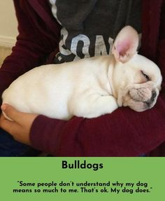 Find out about Bulldogs Simply click here to get more information...