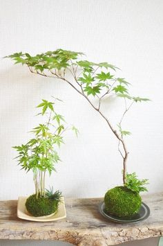 Unique Kokedama Ball Ideas for Hanging Garden Plants